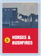Horses and bushfires